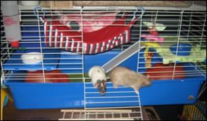 Rabbit_cage
